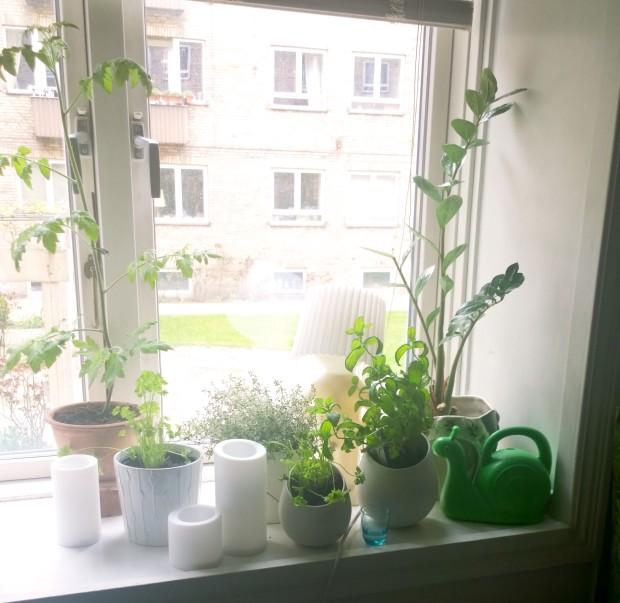 vinduekontor