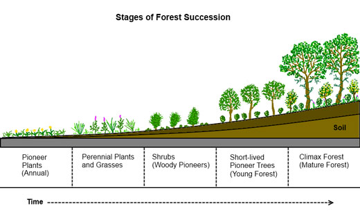 Forest-Succession_profile